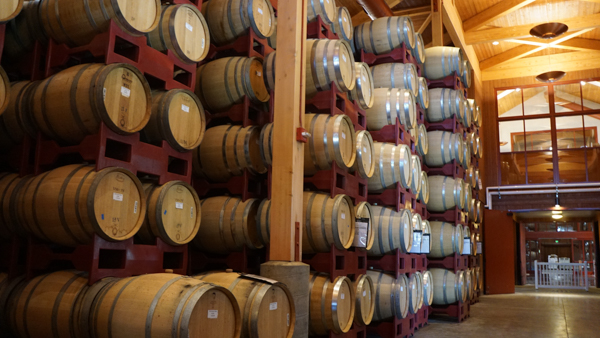 Wine Being Aged in Barrels